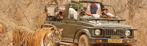 Indie Wycieczki zwierzęta