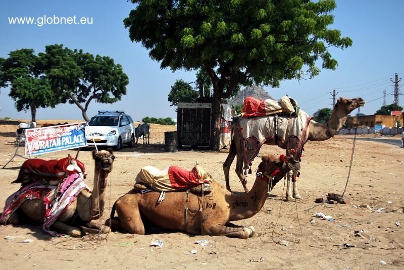Tania wycieczka do Indii